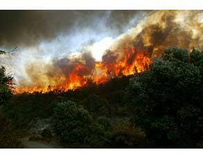 Incendie dans un écosystème forestier