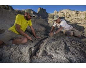Paléontologues