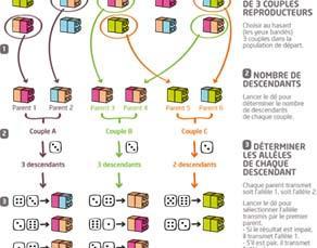 Principe de modélisation de la dérive génétique