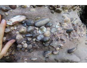Zoom d'un affleurement de roches sédimentaires détritiques