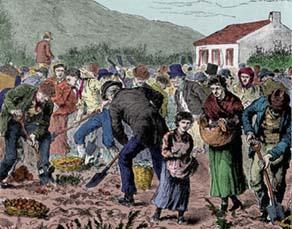 La famine de la pomme de terre en Irlande