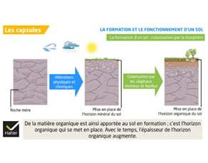 La formation et le fonctionnement d'un sol