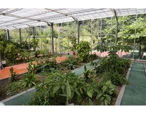Purification d'eaux usées par des plantes