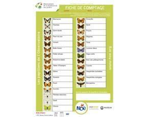 Une feuille de comptage de papillons