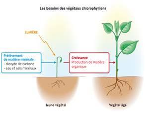 Les besoins des végétaux chlorophylliens