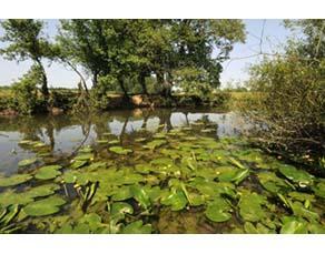 Un écosystème près d'une rivière