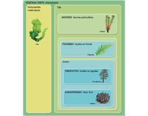 La classification des végétaux verts