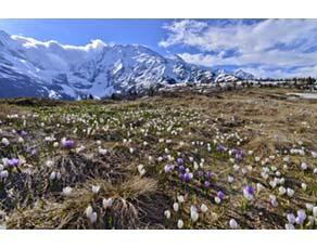 Diversité dans une prairie alpine