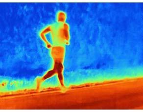 Modification de la température lors de l'effort physique