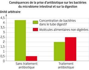Conséquences de la prise d'antibiotiques sur les bactéries du microbiome intestinal et la digestion