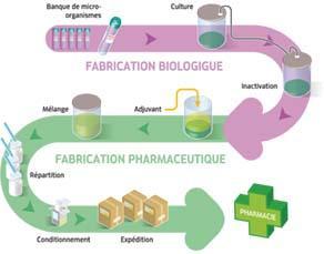 La fabrication d'un vaccin