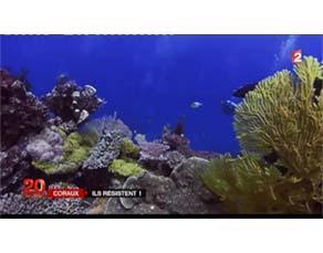 Les coraux et le changement climatique