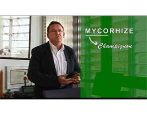 La mycorhize : une symbiose plantes-champignons