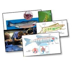 La diversité des systèmes circulatoires des animaux