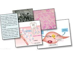 Les besoins nutritifs des cellules