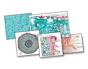 L'approvisionnement des cellules chez les végétaux