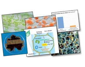 L'utilisation de la matière organique, à l'échelle cellulaire