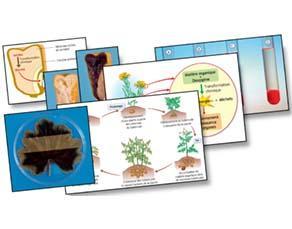 L'utilisation de la matière organique, à l'échelle des organes