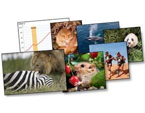 Les rôles de la nutrition des animaux