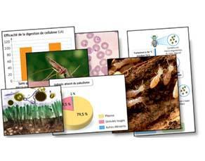 Micro-organismes et nutrition des animaux