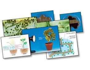 Localisation de la production de matière organique