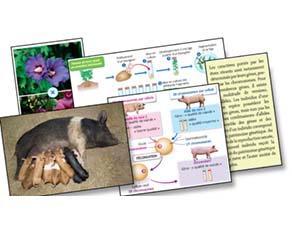 Reproduction et transmission du patrimoine génétique