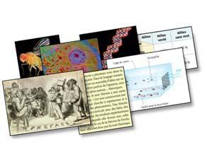 L'évolution, une théorie scientifique