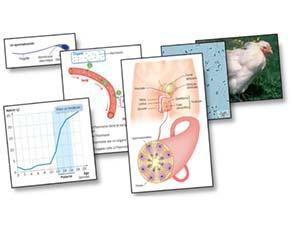 Anatomie et fonctionnement de l'appareil reproducteur masculin