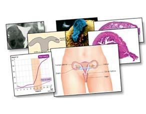 Anatomie de l'appareil reproducteur féminin