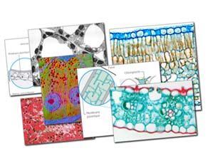 L'organisation structurale des êtres pluricellulaires