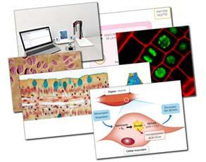 Énergie et fonctionnement cellulaire