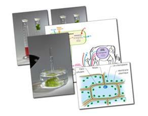 L'origine des molécules organiques stockant de l'énergie