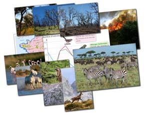 Deux échelles de la biodiversité
