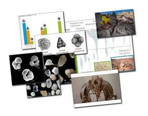 L'évolution de la biodiversité à l'échelle des temps géologiques