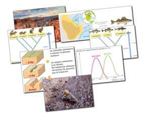 L'émergence de nouvelles espèces sous l'effet des forces évolutives