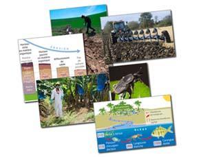 Des modèles agricoles dégradant l'environnement