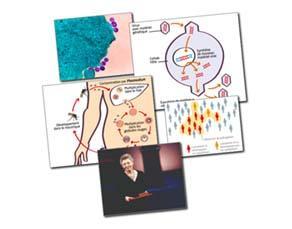 Des maladies infectieuses variées